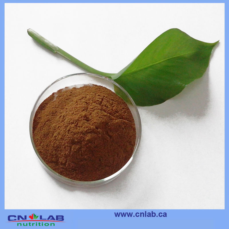 Chinese herb medicine Red Reishi Mushroom Extract/Reishi Extract from GMP factory