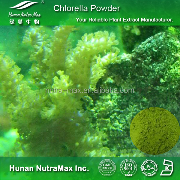 High Quality Chlorella Powder,Chlorella Vulgaris Powder,Chlorella Powder Price