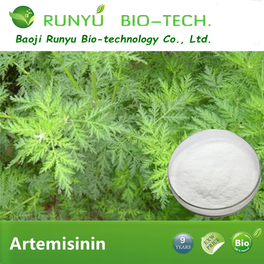 Artemisinin cancer with natural wormwood extract buy artemisinin Artemisia Annua Extract Powder