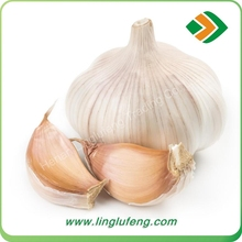 wholesale 2016 new crops Chinese Fresh Normal White Garlic with factory price