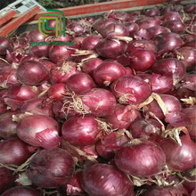 wholesale onion importers in singapore for wholesales