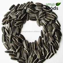 2015 Type 5009 Sunflower Seeds