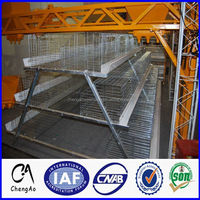 High quality automatic chicken cage for growing broiler and day old layers chicken