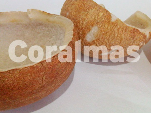 White Copra (Dried Coconut)