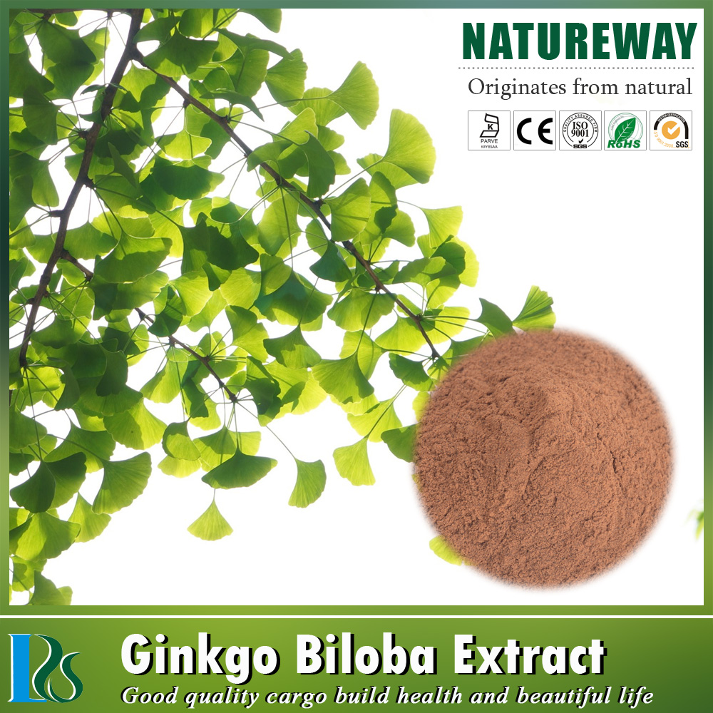 High Quality plant extract dried ginkgo biloba leaves