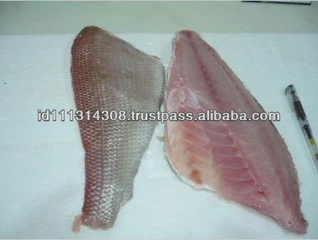 Good Quality Fresh Sea Bass Fish for Sale