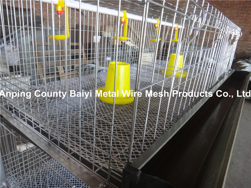 Design Broiler Chicken Cages