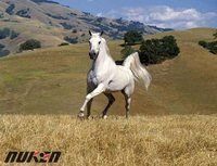 Original High Quality New Design 3D Picture Horse