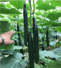 Quality High Yield Hybrid Green Cucumber Seeds from China