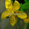 /product-gs/100-natural-herbal-hypericum-perforatum-extract-hypericin-0-3--60428649663.html