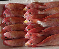 150-350g size fresh high quality frozen red snapper sea bream fish whole round