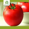Brand new farm fresh tomatoes for sale with CE certificate