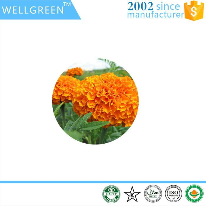 top quality pure natural corpus lutein powder marigold plant extract