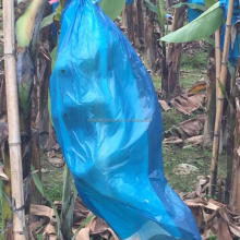 Agriculture biodegradable fruit cover protection plastic banana grow bags