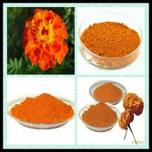 Marigold Extract/Tagetes erecta L /Lutein Powder 5%-80%HPLC