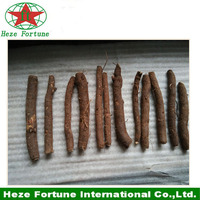 Fresh Paulownia Tomentosa root cutting for sale on alibaba