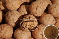 100% pure organic bio best sell black walnut extract powder.