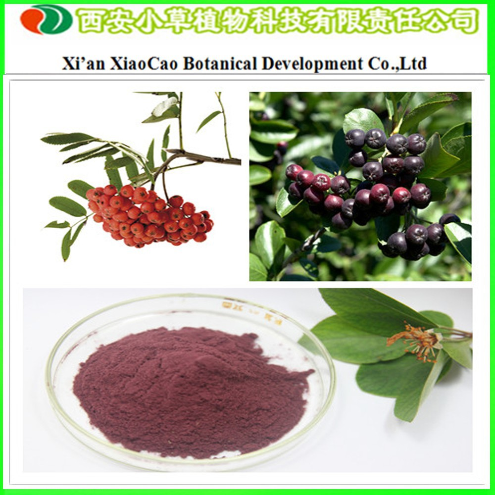 Supply High Quality Chokeberry Extract Powder 25% Anthocyanin/Aronia Melanocarpa Extract