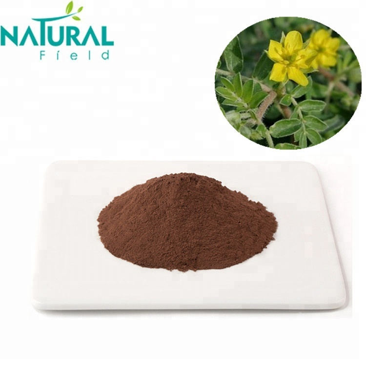 Pure Natural Tribulus terrestris Powder 90% Extract