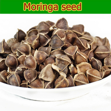 Moringa seed for enhance immunity