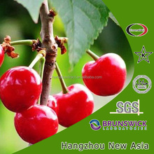 Natural Vitamin C 17% Acerola Cherry Extract With Kosher Halal ISO22000 Certificate