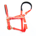 New Listing 17mm Wide PVC Horse Halter With Foam Padding For Race
