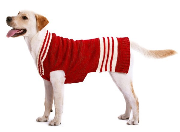 Attractive price new type cashmere dog sweaters