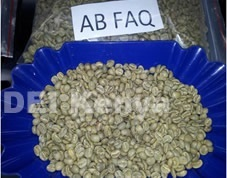 Kenya Grade AB FAQ Coffee