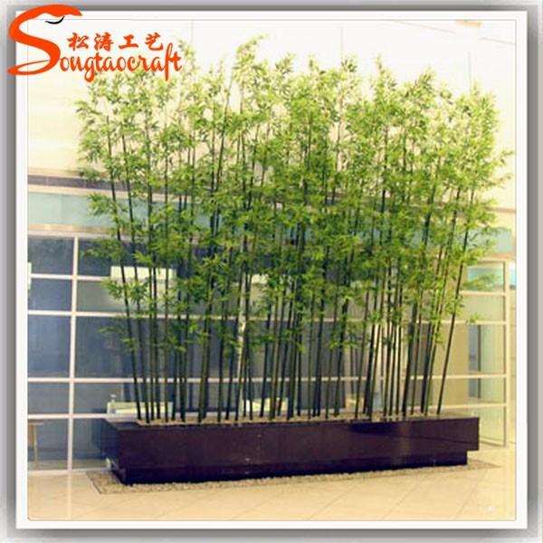 hotels lucky bamboo planten te koop decoratieve bamboe