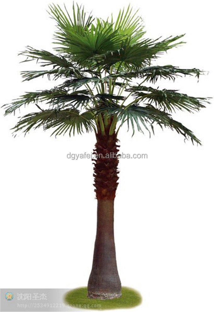 Image Result For Bonsai For Sale Palm Beach