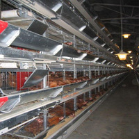 automatic breeding equipment durable chicken coops used hen nesting boxes for layer sale