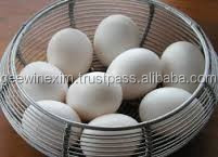 White Shell Egg Exporters
