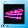 hot sale SMD5050 source indoor garden cultivation blooming series 24W led plant grow light