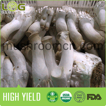 New Technology Health King Oyster Mushroom Log Shape Cultivating Block