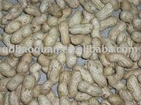 Groundnut in Shell (Large Size)
