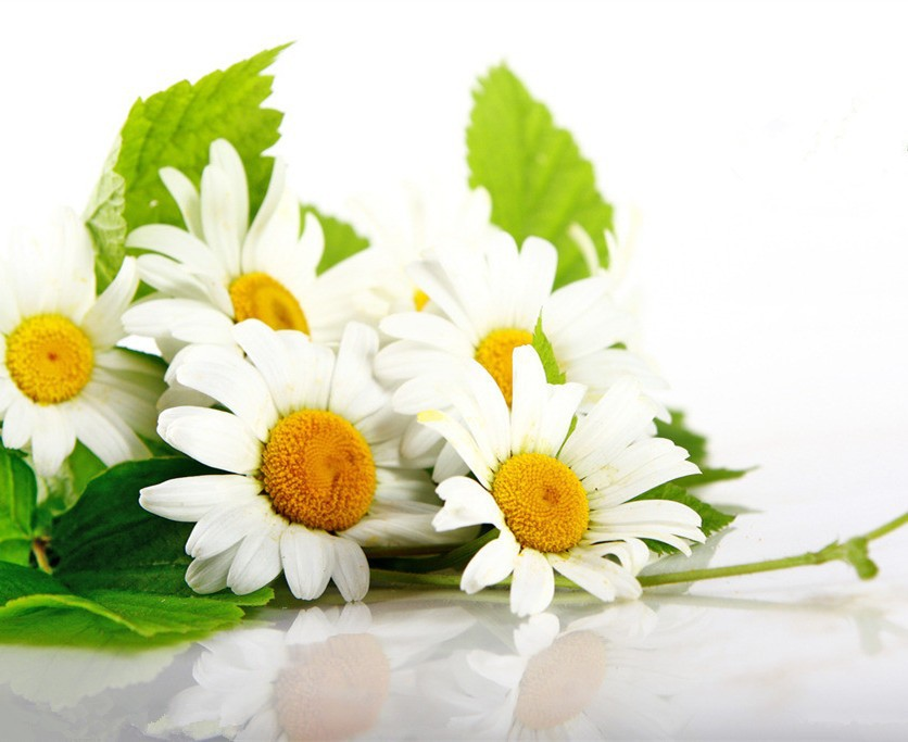 Favorable price 100% Natural Chamomile Extract Powder 5:1/10:1/20:1
