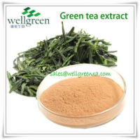Top Grade Powder 40% Tea Polypheols For Anti-aging
