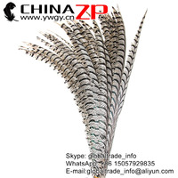 ZPDECOR Factory Wholesale 80-90cm Long Natural ZEBRA Lady Amherst Pheasant Tail Feathers