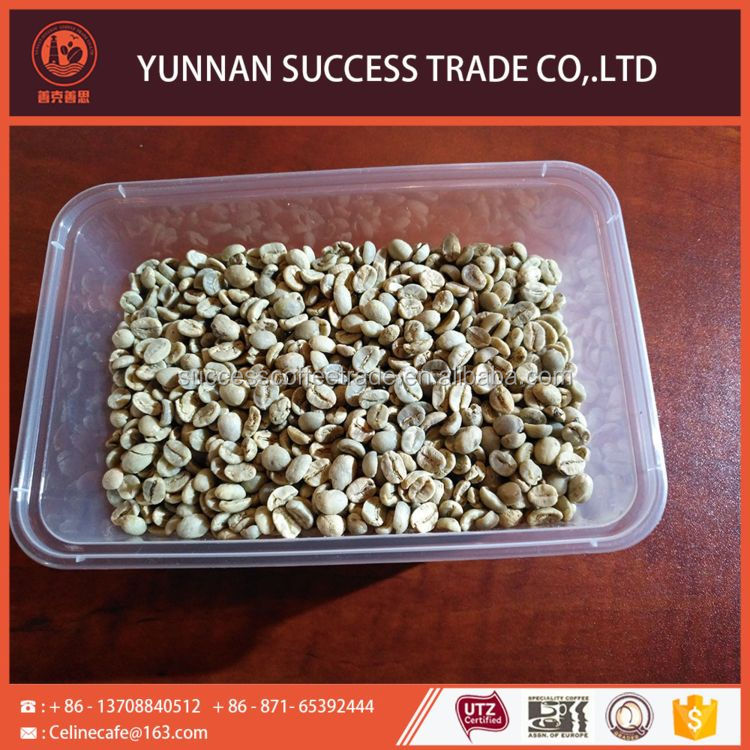 China manufacture hot sale top quality green arabica coffee beans