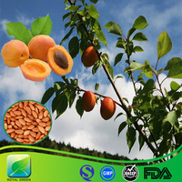 GMP Supply Best Sells bitter almond extract/bitter apricot seed p.e.amygdalin 98%