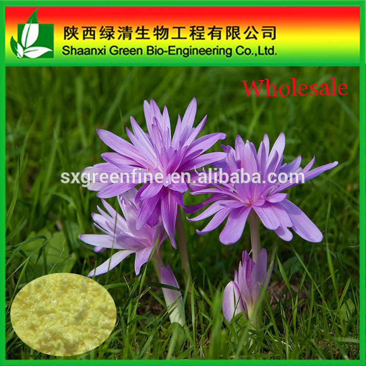 Colchicum autumnale extract Colchicine powder CAS No 64-86-8