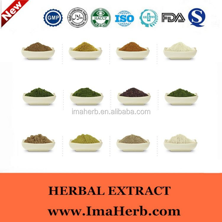 GMP Factory supply arnica flower extract powder