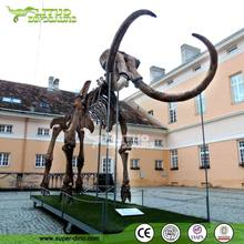 Real Size Mammoth Anmial Skeleton Model