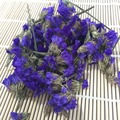 4017 Wu wang wo 2017 Chinese natural Dried Limonium sinuatum flowers
