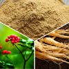 Ren Shen 10 years Factory Supply health Ginseng Dry Extract