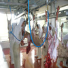 halal meat slaughterhouse for Sheep,Goat, Lamb