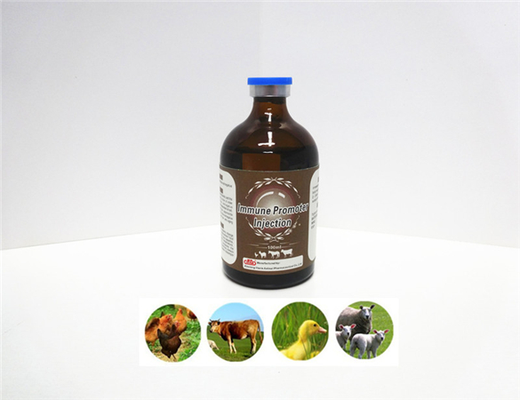 High quality veterinary GMP Chinese herbal medicine Immune Promoter work as poultry and livestock Chinese herbal medicine