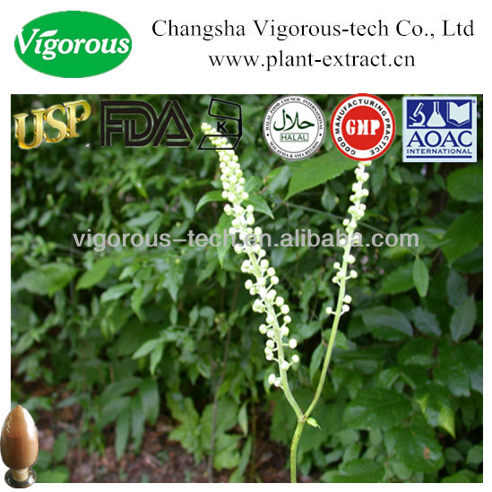 High quality balck cohosh extract/natural black cohosh extract powder