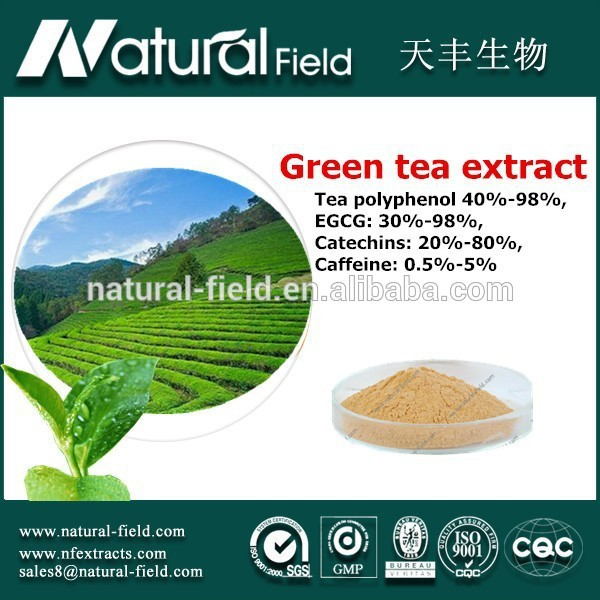 Full stocked Bottle price green tea extract 40% egcg