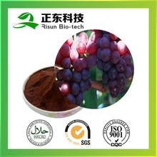 Organic Raw Material Grape Seed Extract 95% Proanthocyanidins